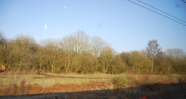 Woods by the WCML