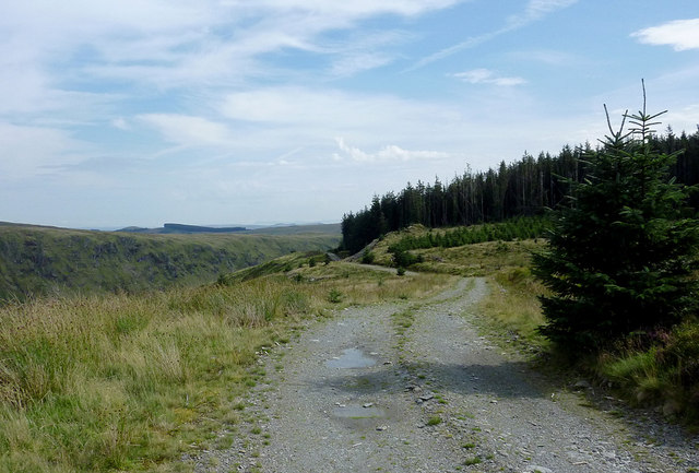Forestry road north-west of Abergwesyn
