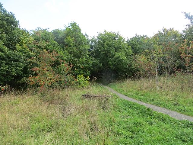 Tillywhally Woodland
