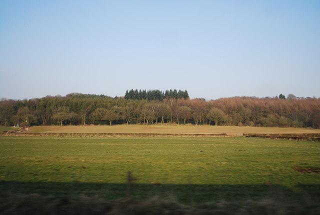 Whitmore Wood