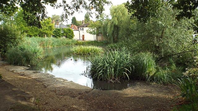 Harefield Pond