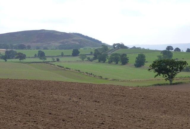 Recently planted cereals near Crawley Farm