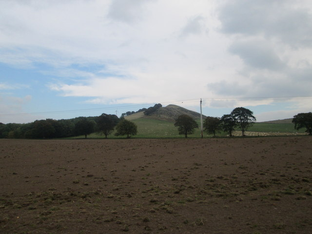 Bizzyberry Hill