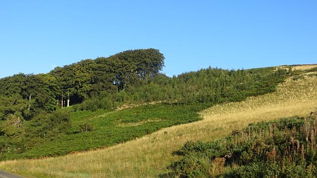 Woodland on Bothwell Hill