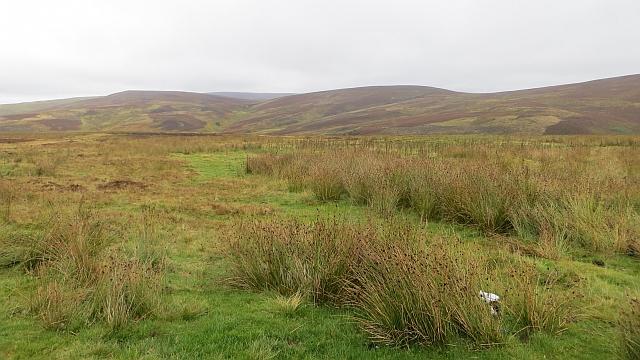 Moorland, Newlands Hill