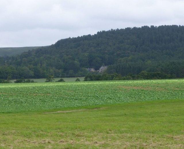 Arable land near Scar Brae