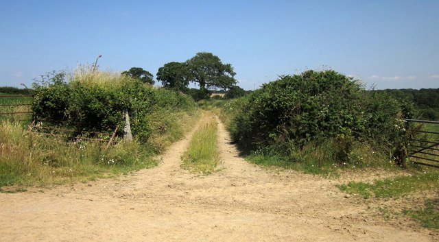 Field access track near Lutworthy