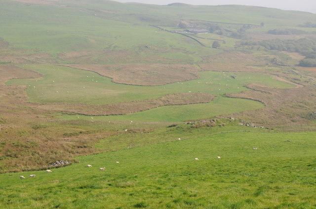 Upland grazing