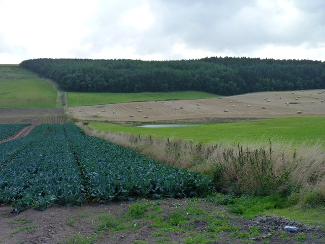 Fields in front of Brownie Wood