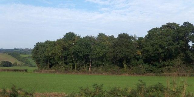 Woodland near Springfield House, Kilmington