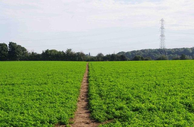 Public footpath across a field, near Spennells, Kidderminster