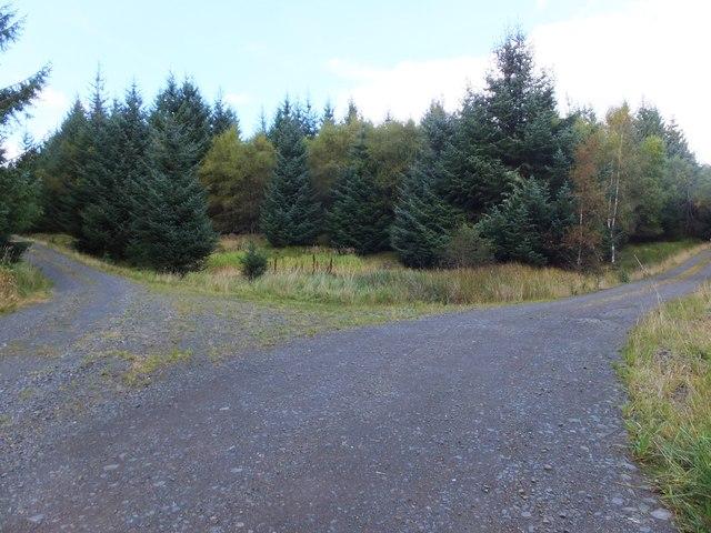 Junction of forest tracks