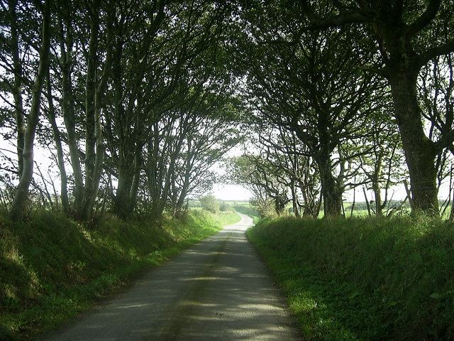 Tree-lined country road
