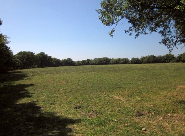 Field, Mouseberry Moor