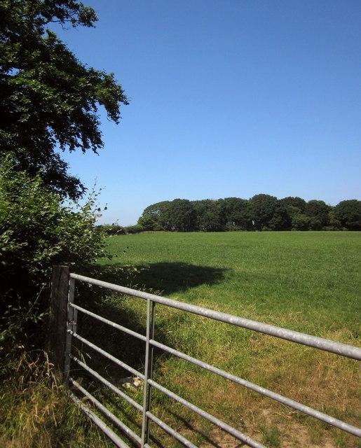 Field near Mouseberry