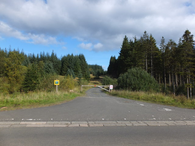Forest road into Bull Crag Peninsula