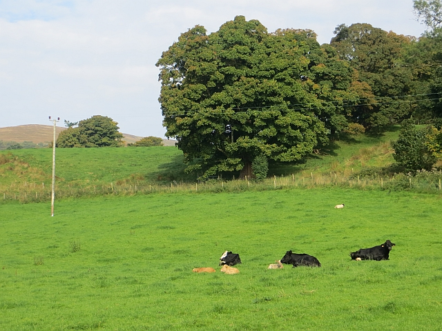 Cattle, Inverneil