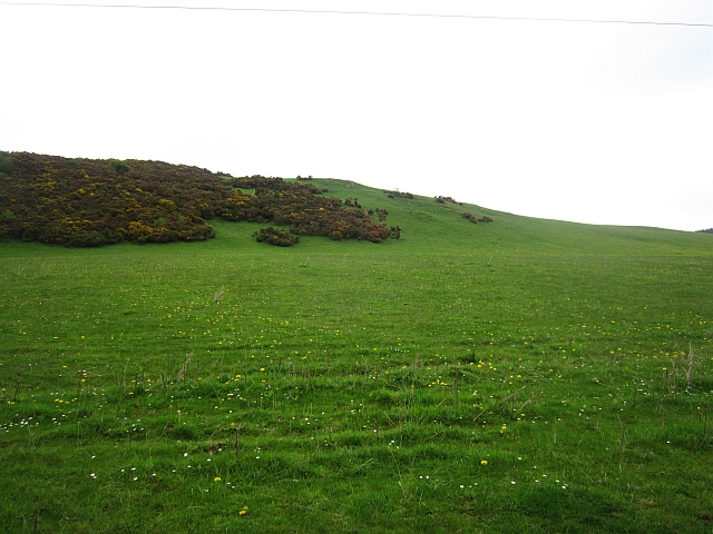 Pasture, Broden Hill