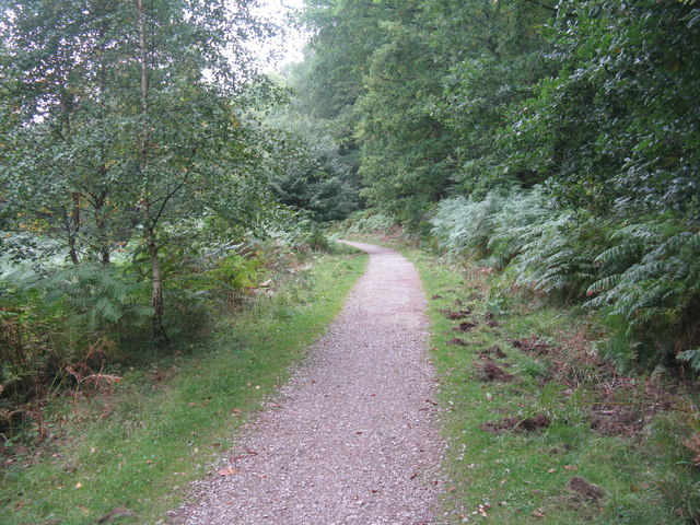 Path in the Forest of Dean