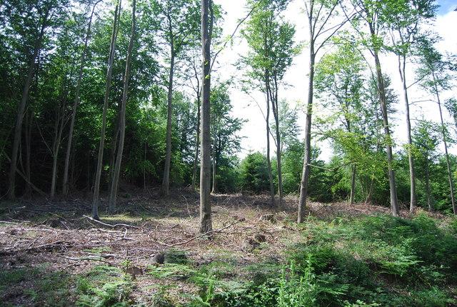 Lower Leggett's Wood