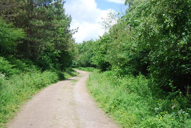 Footpath in Leggett's Wood