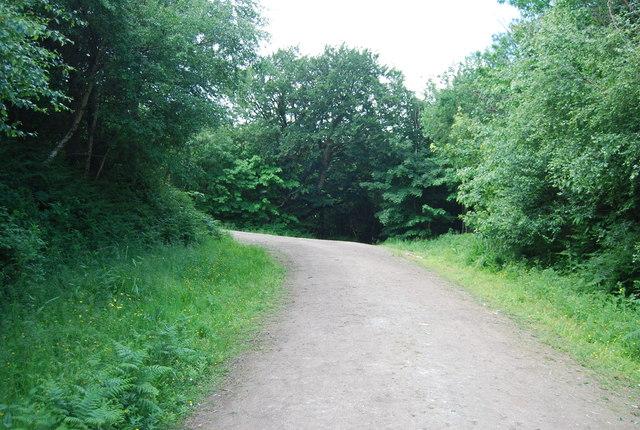 Forest track, Leggett's Wood