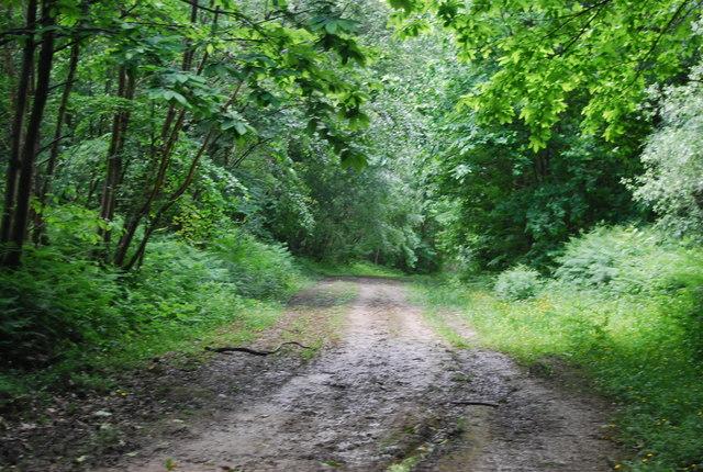 Bridleway, High Wood