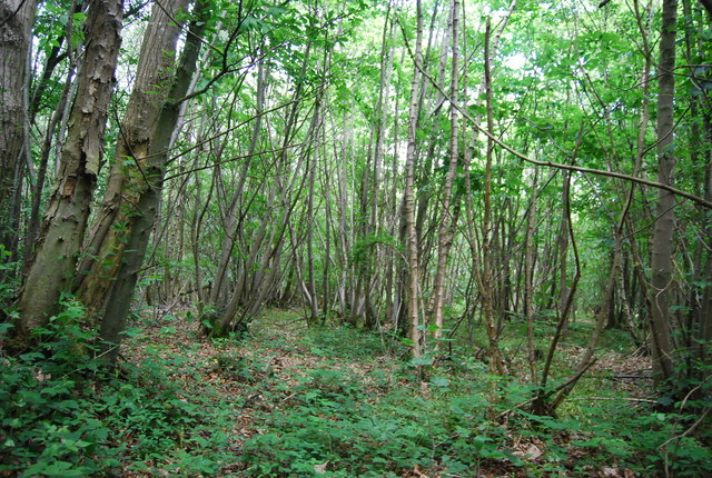 Coppicing High Wood