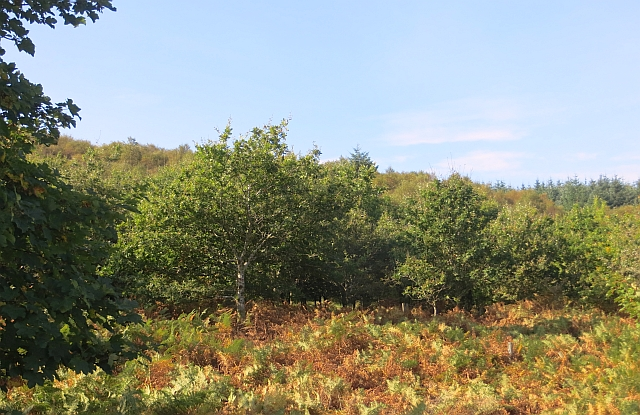 Rhubodach Plantation