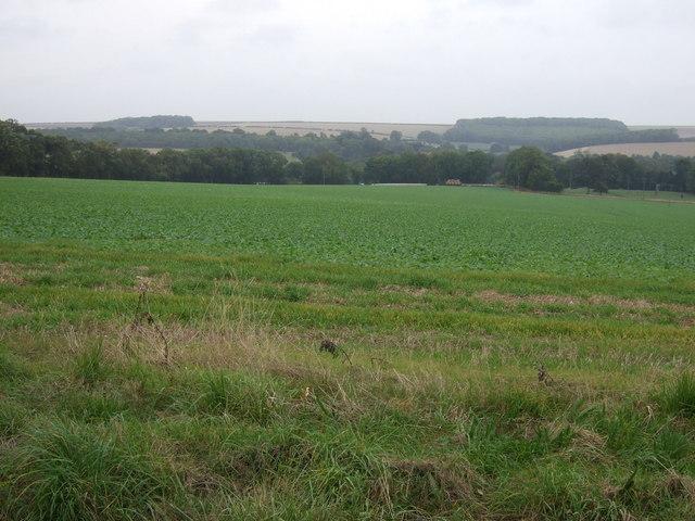 Crop field off Woldgate