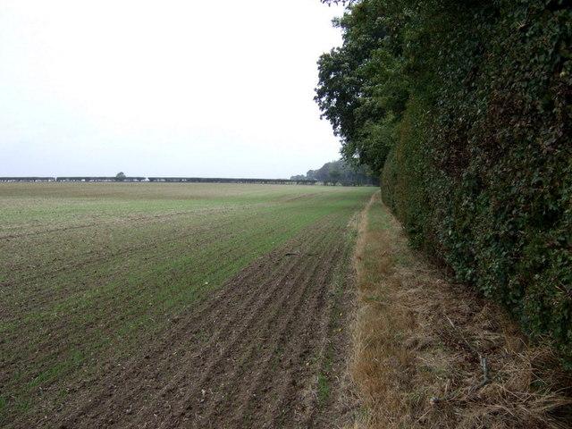 Farmland and hedgerow