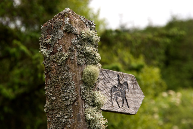 A mossy sign, Cwmsymlog