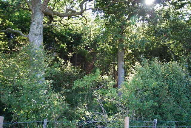 Wellhead Wood
