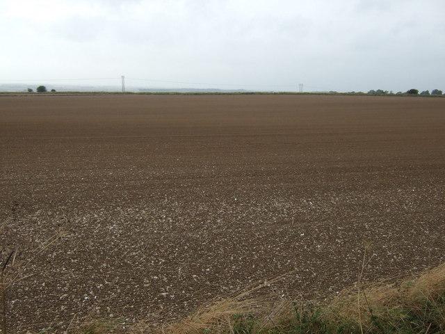 Farmland, Haisthorpe Field