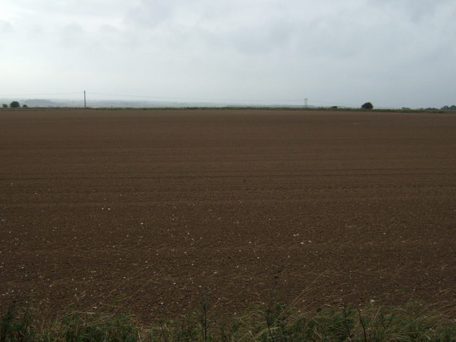 Farmland, Haisthorpe Field