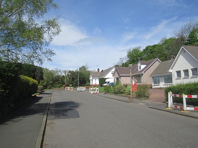 Suburban Paisley
