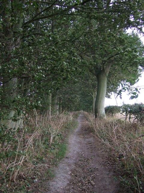 Bridleway towards Woldgate