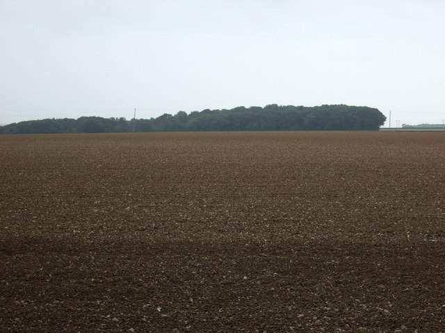 Farmland towards Hallowkiln Wood