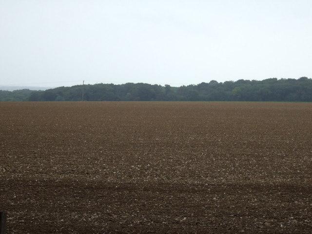 Farmland towards Hallowkiln Wood