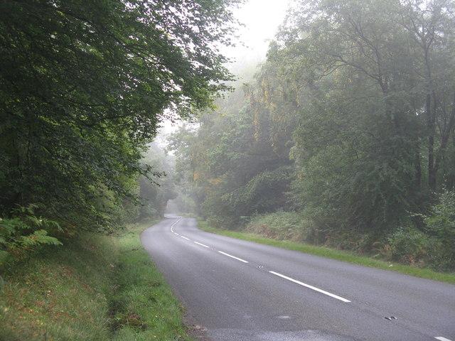 Fancy Road at Shaden Tuft