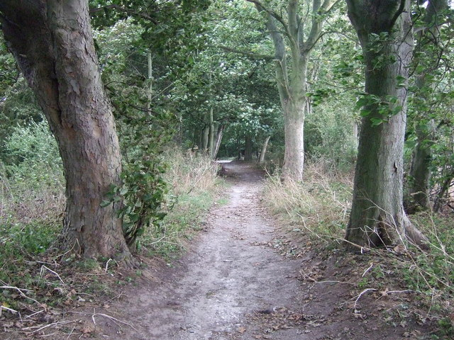 Bridleway approaching Woldgate