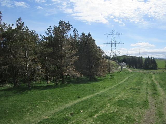 Woodland edge, Gleniffer Braes
