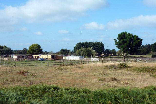 Equestrian shanty town
