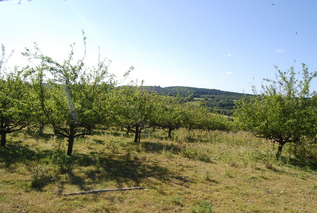 Orchard by Wellhead Wood