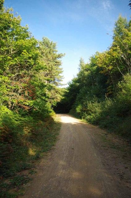 Track & Mountain Ash