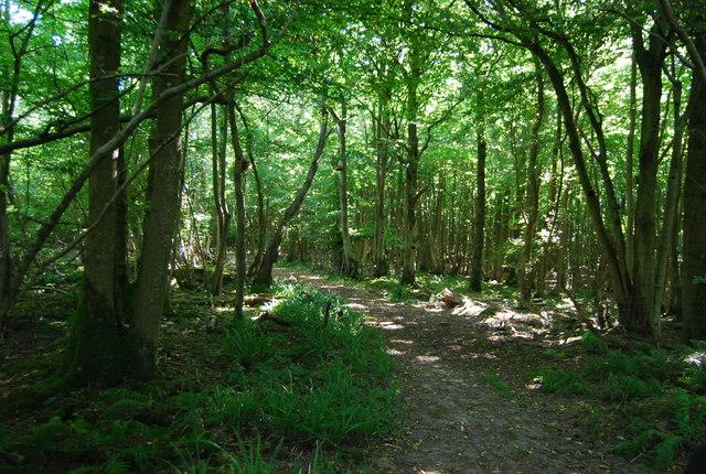Bridleway, Wellhead Wood