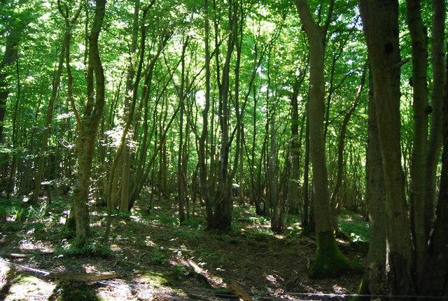 Wellhead Wood West