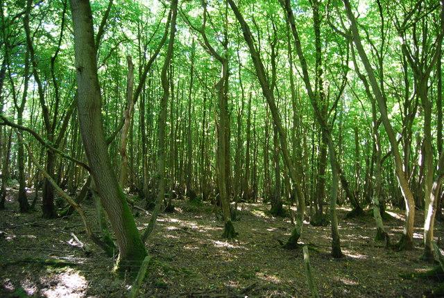 Lordship Wood