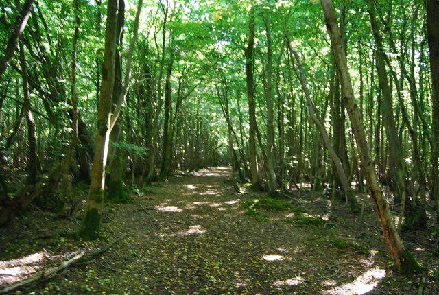 Bridleway, Wellhead Wood West