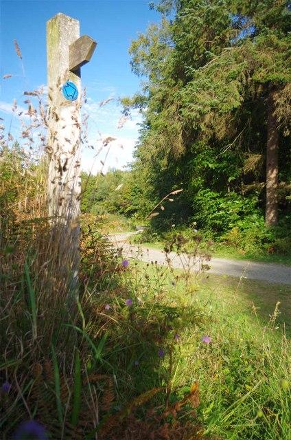 Bridleway Through Frith Wood